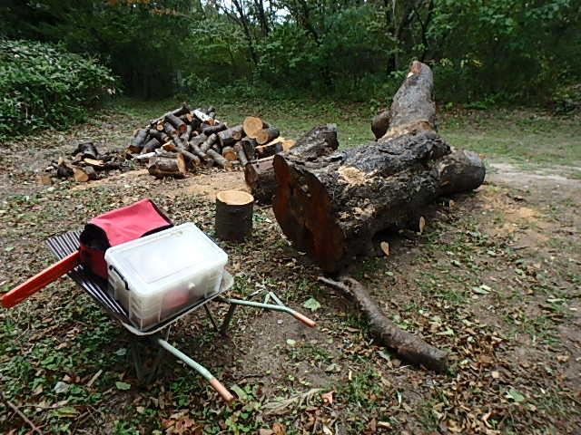 メタボリック原木と遊ぶ1