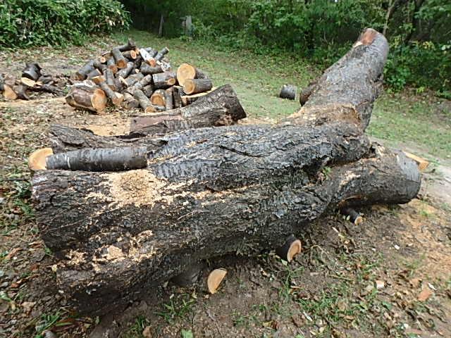 メタボリック原木と遊ぶ2