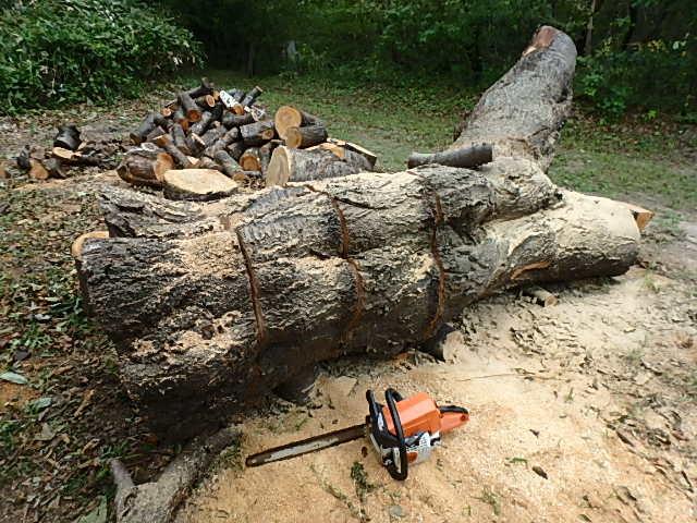 メタボリック原木と遊ぶ3