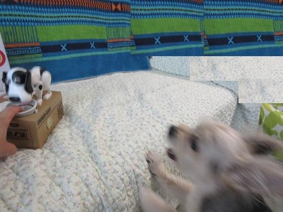 8B12 貯犬箱 0715