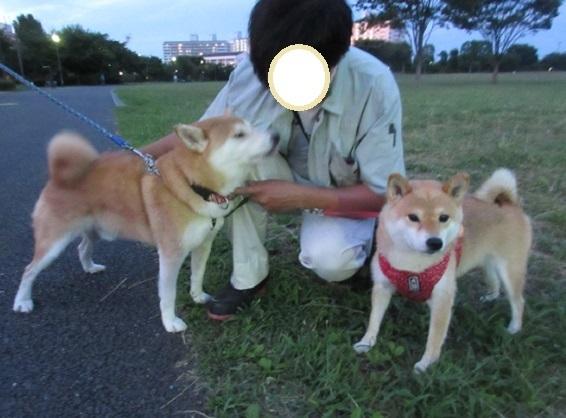 7D01S 柴犬君 0728