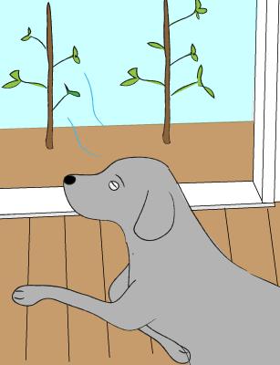 自然の風に吹かれるラブラドール