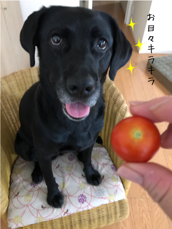 coco17072401.png