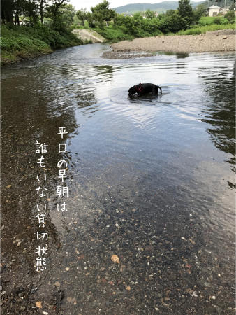 ラブラドールの川遊び