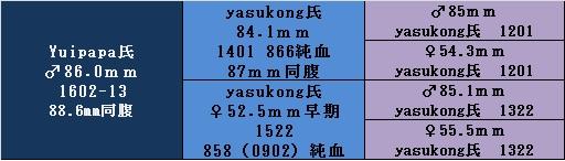 yg1602-13.jpg