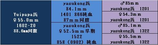 yg1602-20.jpg