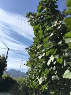 2017 09 21 Wa Yawata Ch 収穫-13