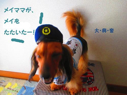 pachi3.jpg