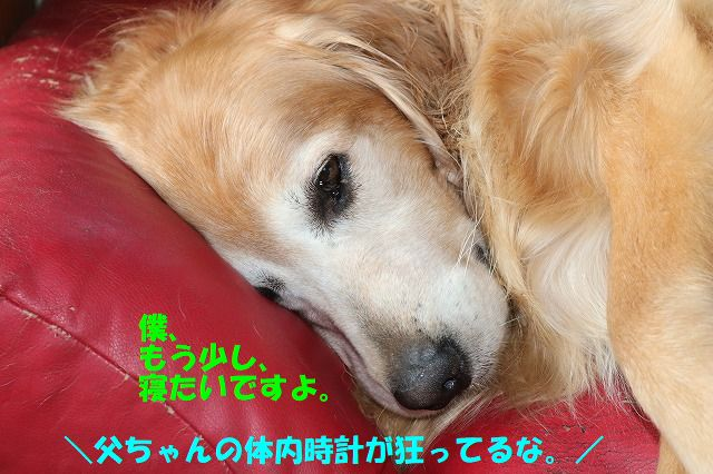 IMG_1634_20170714214159d7f.jpg