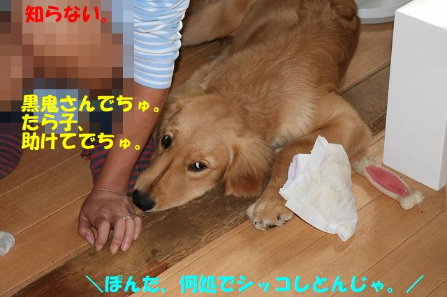IMG_1681_20170715203351109.jpg