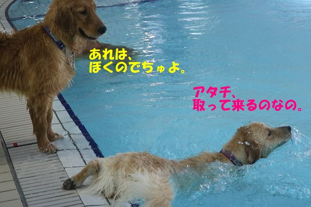 IMG_3490.jpg