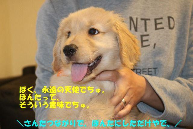 IMG_7180_2017081223490605c.jpg
