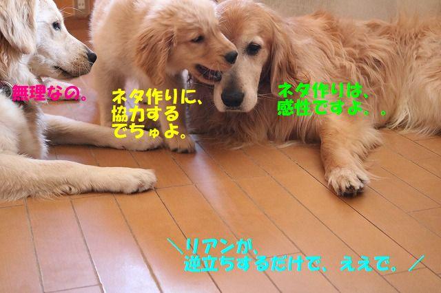 IMG_8113_20170814002852785.jpg