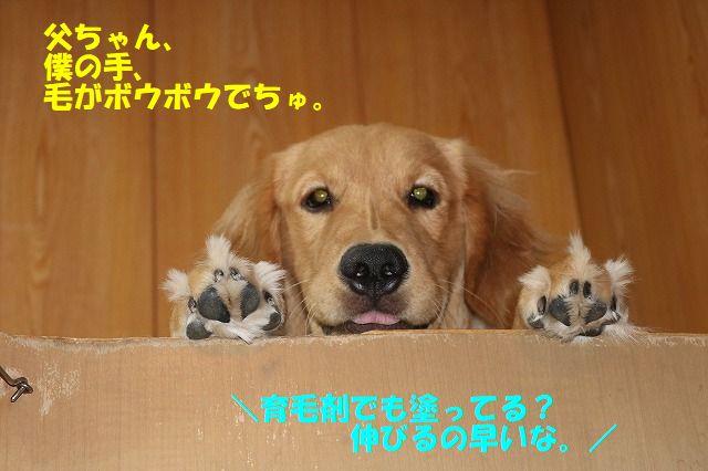 IMG_8960.jpg
