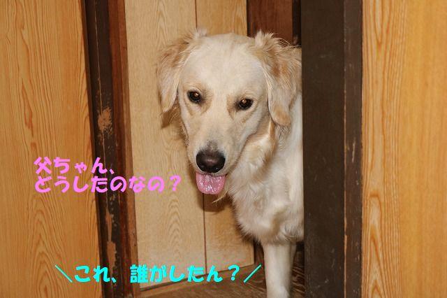 IMG_9442.jpg