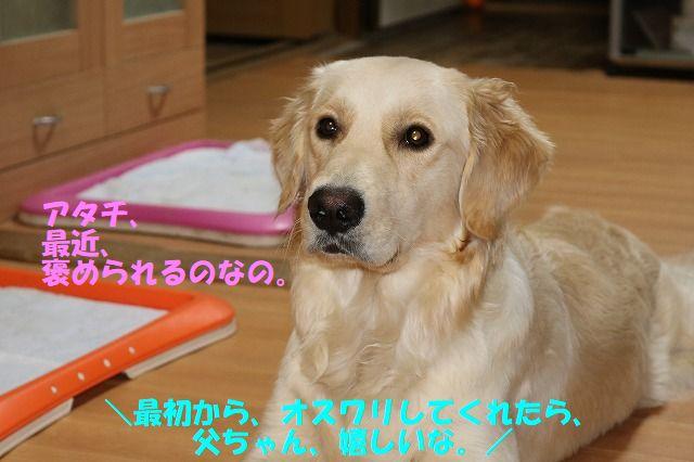IMG_9539.jpg