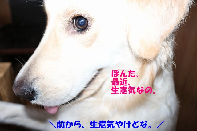 IMG_9567.jpg