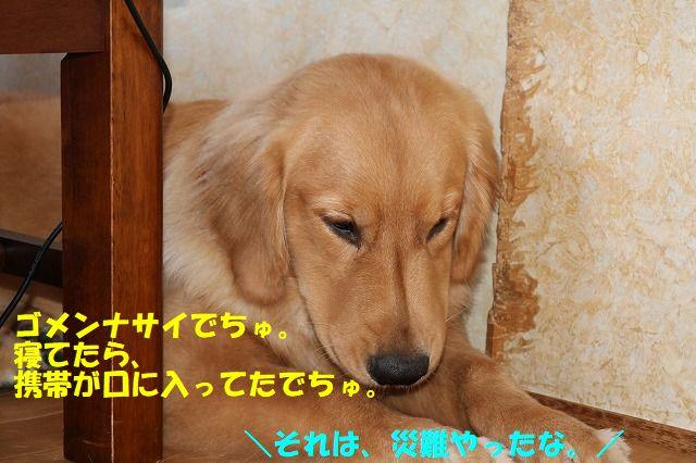 IMG_9695_20170926192831d09.jpg