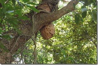 170828012山の中で見かけたキイロスズメの巣