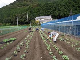 haboshoku005.jpg