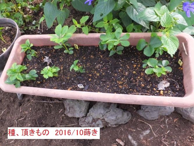 DSCF2914_1.jpg
