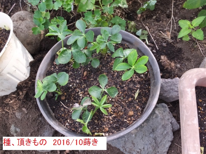 DSCF2915_1.jpg