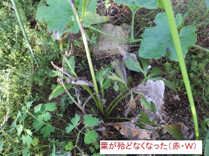 DSCF2951_1.jpg