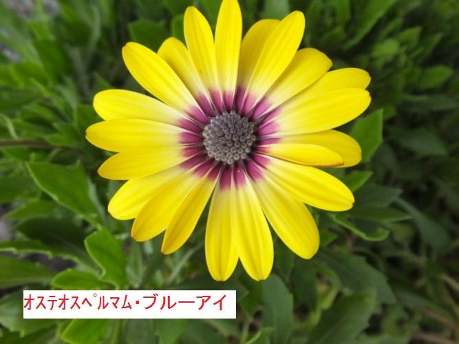 DSCF2965_1_2017092710394370f.jpg