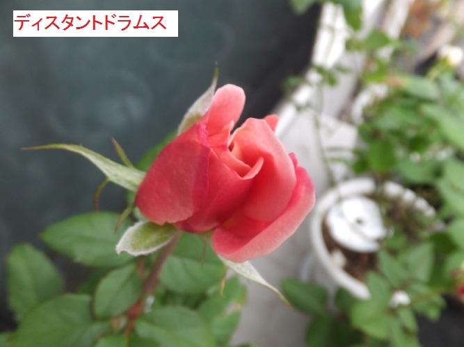 DSCF2979_1.jpg