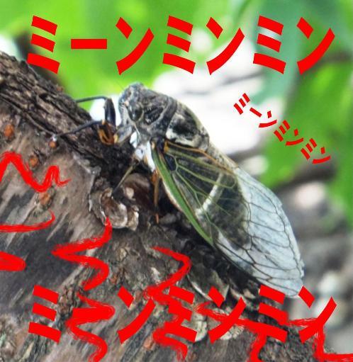 semi_07300061.jpg