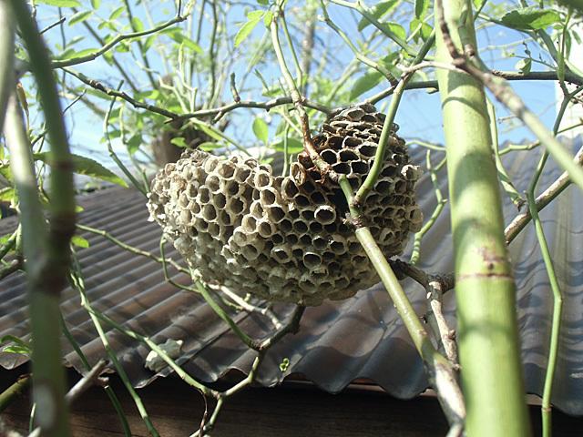 誰もいなくなったハチの巣