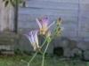 平成29年9月お花