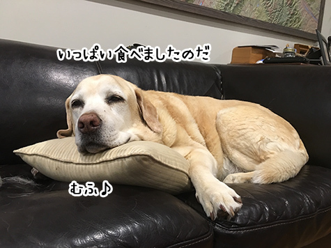 03082017_dog2.jpg
