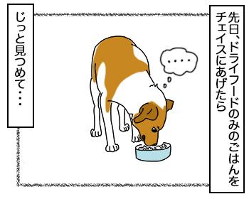 05092017_dog1.jpg