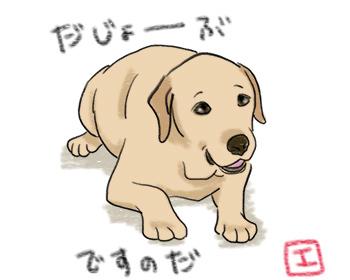 21072017_dog1.jpg