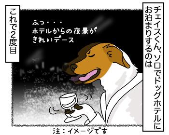 25092017_dog1.jpg