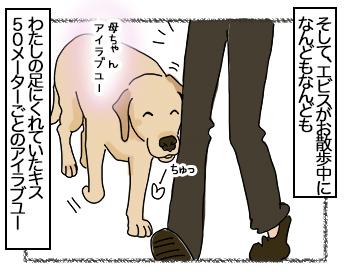 28082017_dog6.jpg