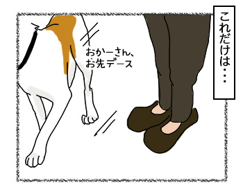 28082017_dog7.jpg