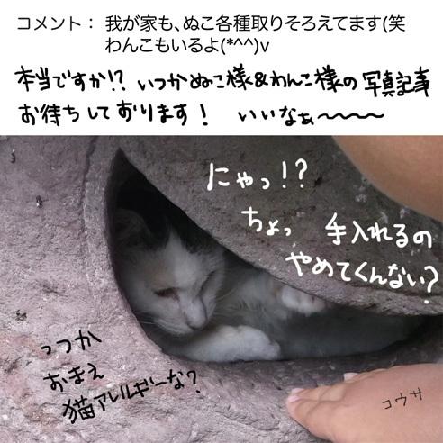 0813neko.jpg