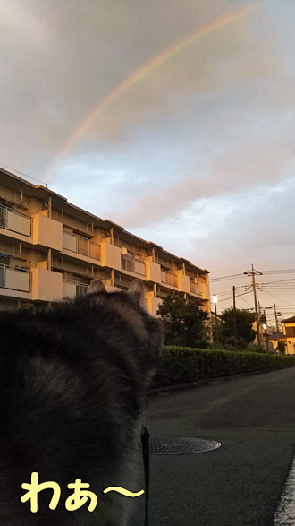幻想的な虹と空