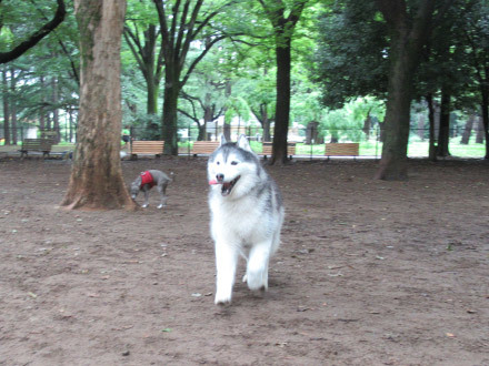 8月なのに涼しかった代々木公園