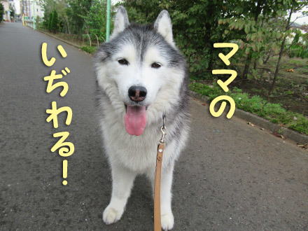 お天気雨散歩