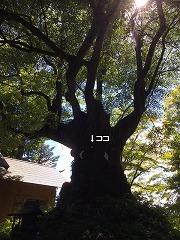 s-IMG_1028.jpg