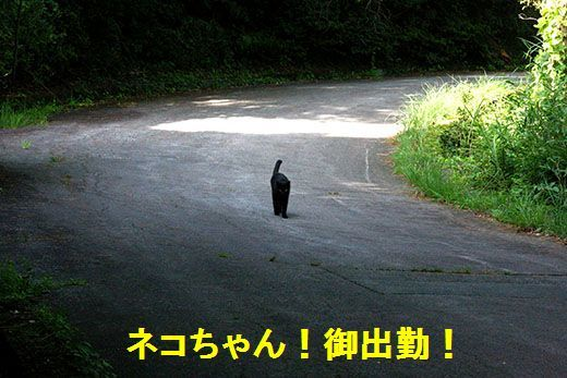 IMG_1197_.jpg