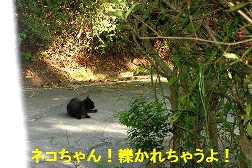 IMG_1209_.jpg