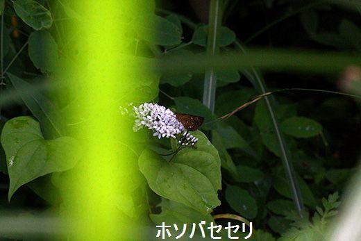 IMG_9684_.jpg