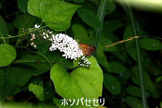 IMG_9689_.jpg
