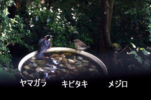 IMG_9865_.jpg