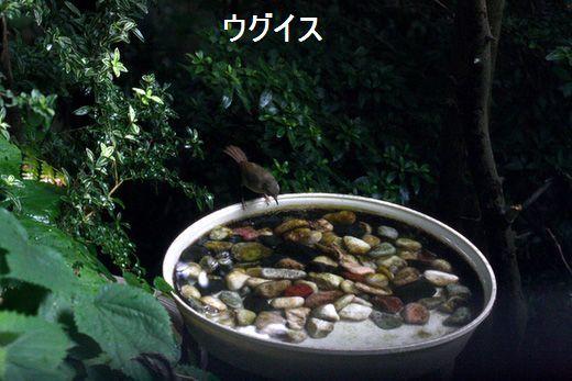 IMG_9909_.jpg