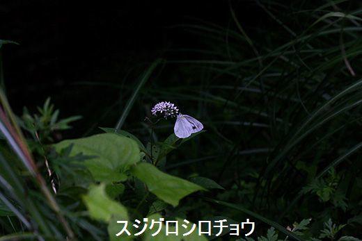 IMG_9931_.jpg